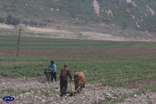 گرسنگی شدید در کمین کره شمالی