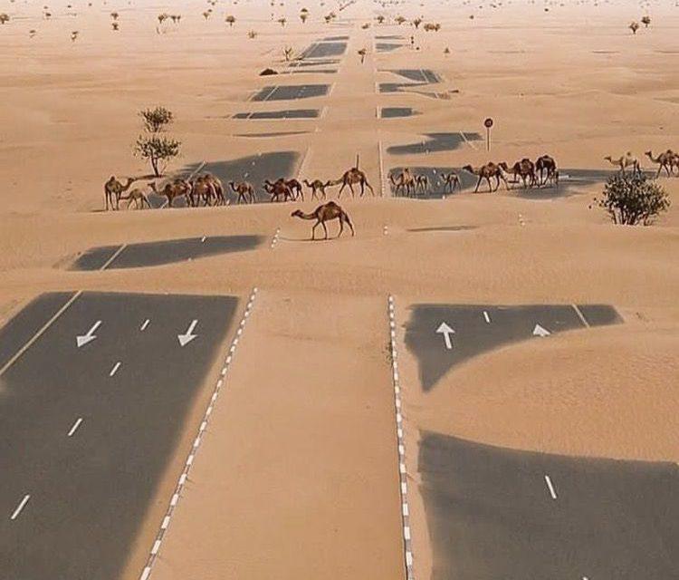 Behind the Scene of Dubai-Abu Dhabi Disputes